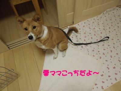 f:id:miyuki1967:20120112111408j:image