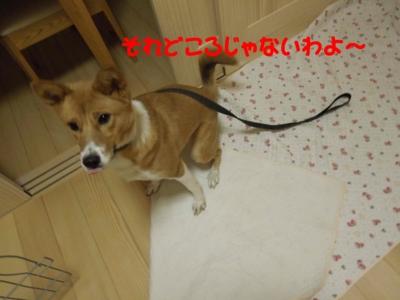 f:id:miyuki1967:20120112111409j:image