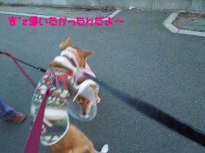 f:id:miyuki1967:20120119095214j:image