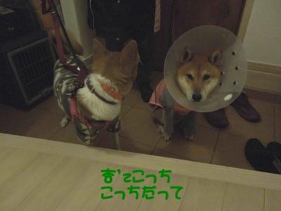 f:id:miyuki1967:20120119104041j:image
