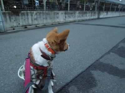 f:id:miyuki1967:20120123065512j:image