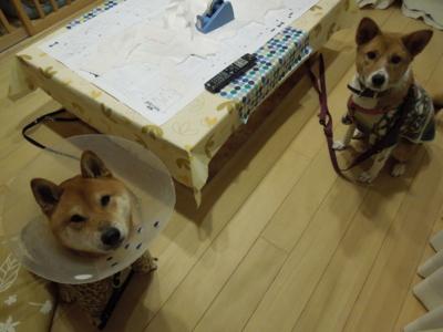 f:id:miyuki1967:20120123194102j:image