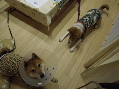 f:id:miyuki1967:20120123194139j:image