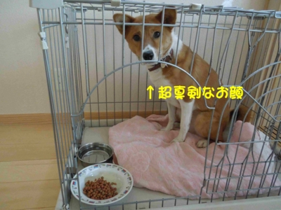 f:id:miyuki1967:20120128115042j:image