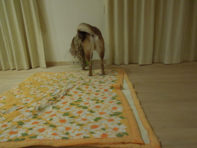 f:id:miyuki1967:20120204230643j:image