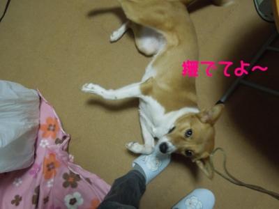 f:id:miyuki1967:20120228125740j:image