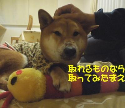 f:id:miyuki1967:20120403113210j:image