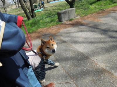 f:id:miyuki1967:20120407110741j:image