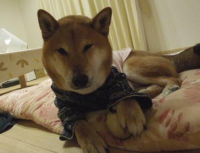 f:id:miyuki1967:20120410092116j:image