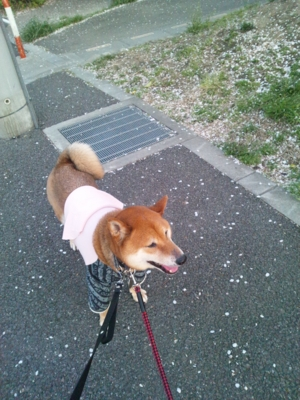 f:id:miyuki1967:20120412180028j:image