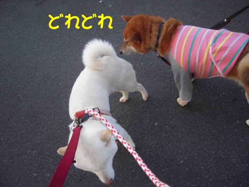 f:id:miyuki1967:20120413101119j:image:w400