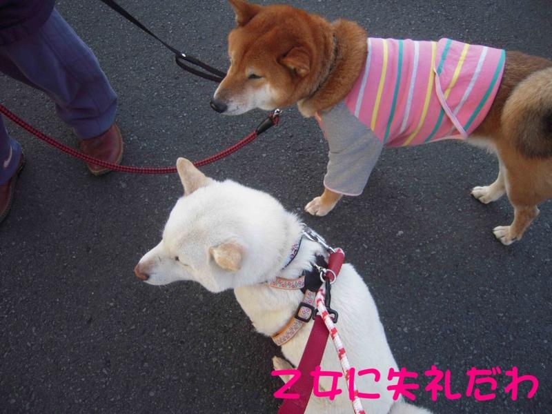 f:id:miyuki1967:20120413101121j:image:w400