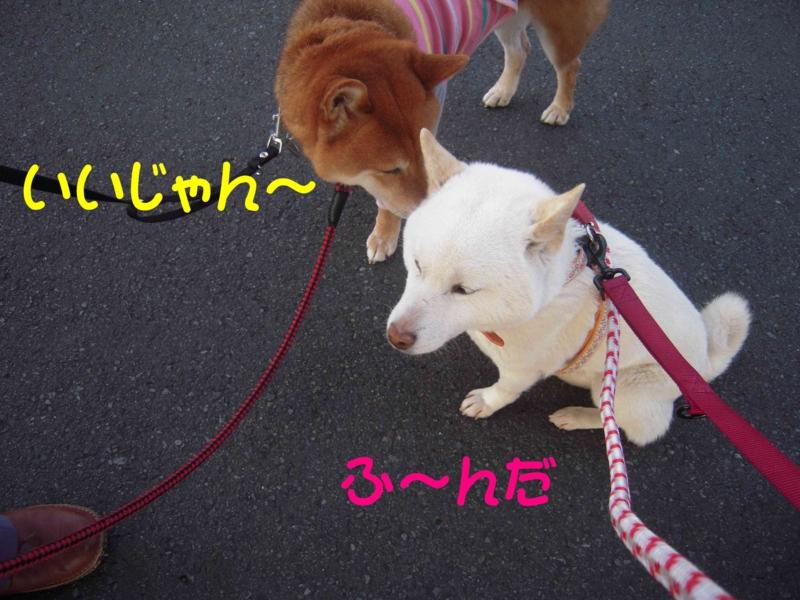 f:id:miyuki1967:20120413101122j:image:w400