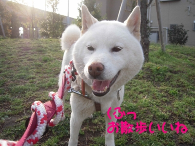 f:id:miyuki1967:20120416093637j:image