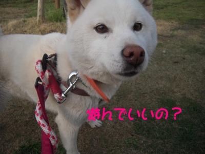 f:id:miyuki1967:20120416093638j:image
