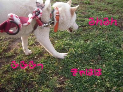 f:id:miyuki1967:20120416093639j:image