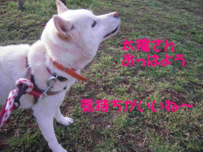 f:id:miyuki1967:20120416093642j:image