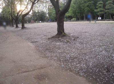 f:id:miyuki1967:20120416093645j:image