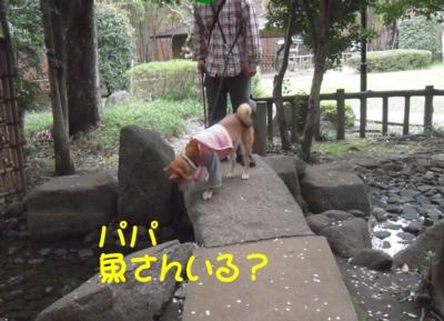 f:id:miyuki1967:20120416093646j:image