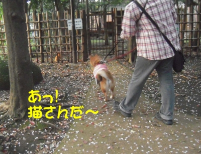f:id:miyuki1967:20120416093647j:image