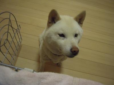 f:id:miyuki1967:20120417200107j:image