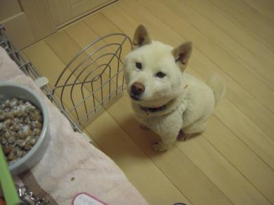 f:id:miyuki1967:20120417200233j:image