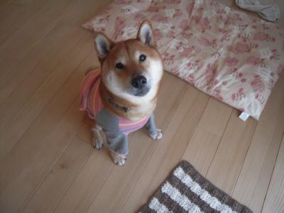 f:id:miyuki1967:20120418070737j:image