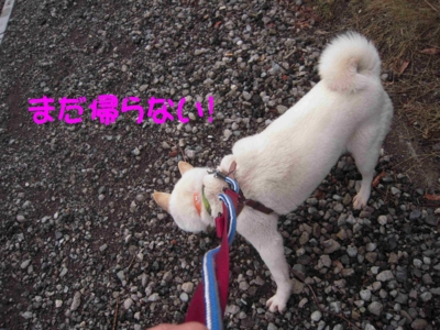 f:id:miyuki1967:20120419094454j:image