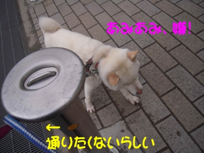 f:id:miyuki1967:20120419094455j:image