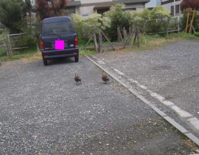 f:id:miyuki1967:20120419143011j:image