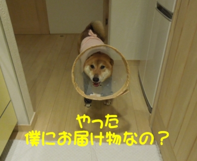 f:id:miyuki1967:20120420091946j:image