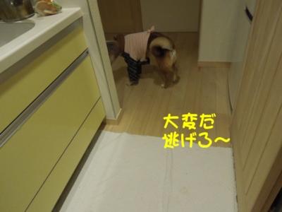 f:id:miyuki1967:20120420091948j:image