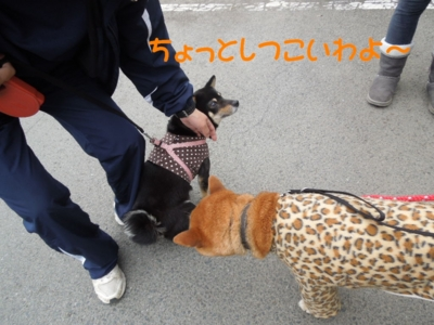 f:id:miyuki1967:20120423105227j:image