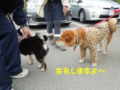 f:id:miyuki1967:20120423105229j:image