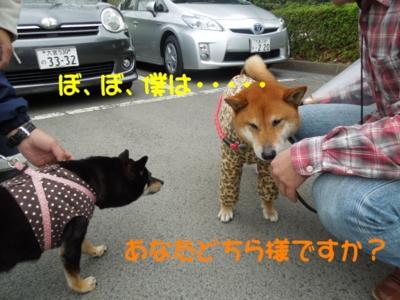f:id:miyuki1967:20120423105230j:image