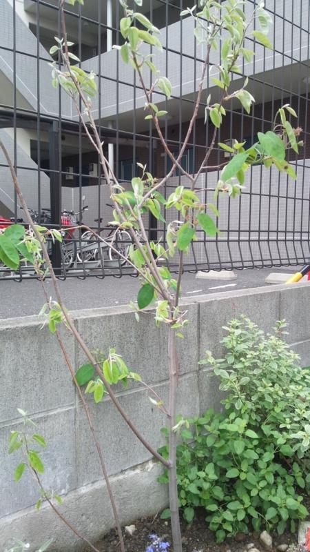 f:id:miyuki1967:20120502104234j:image:w400
