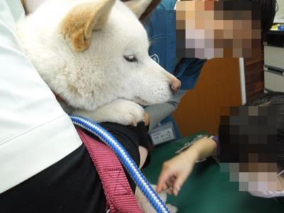 f:id:miyuki1967:20120502230909j:image