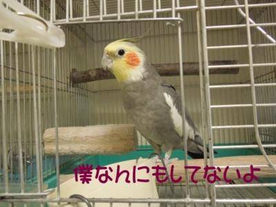 f:id:miyuki1967:20120625095447j:image