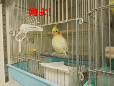 f:id:miyuki1967:20120625095449j:image