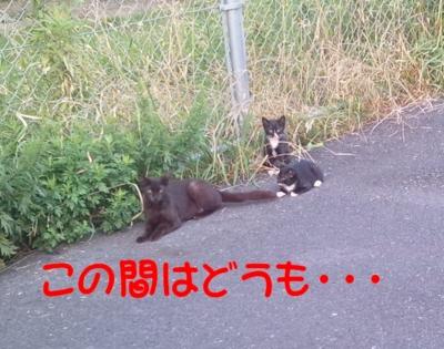 f:id:miyuki1967:20120705090420j:image
