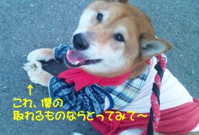 f:id:miyuki1967:20120705090424j:image