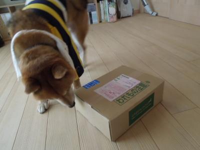 f:id:miyuki1967:20120714121906j:image