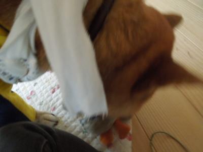 f:id:miyuki1967:20120714122338j:image