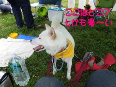 f:id:miyuki1967:20120717090755j:image