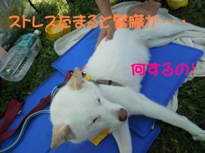 f:id:miyuki1967:20120717090758j:image