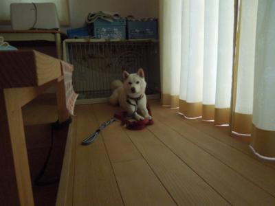 f:id:miyuki1967:20120802061850j:image