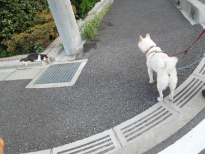 f:id:miyuki1967:20120803061235j:image