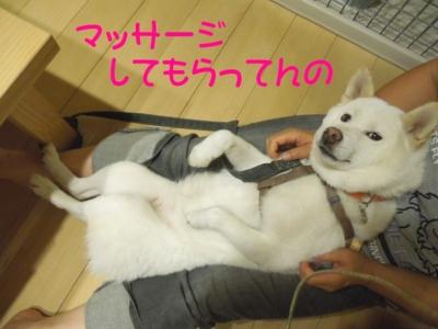 f:id:miyuki1967:20120910094745j:image