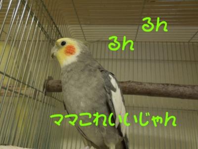 f:id:miyuki1967:20121023102541j:image