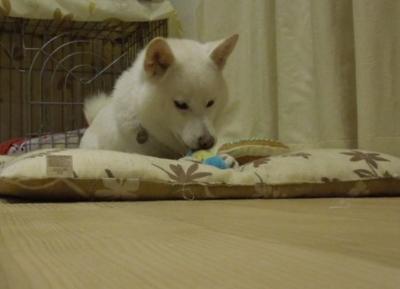 f:id:miyuki1967:20121214095210j:image